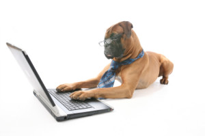 computer use dog 300x199 Online Video Continues to Surge in Popularity and Use