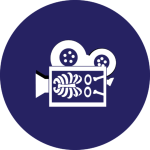 icon for anatomy of a video